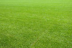 Frisches natürliches Rasengras Lizenzfreies Stockbild