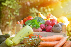 Frisches organisches Gemüse Stockfotografie