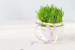 Frisches Ostern-Gras im weißen Topf, hölzerner Hintergrund Stockfotografie