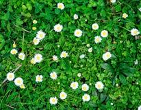 Frisches ?ppiges gr?nes Gras in der Wiese, Naturhintergrund stockfotografie
