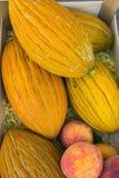 Frisches Rockmelons Lizenzfreies Stockfoto