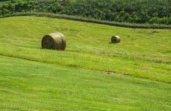 Frisches roled Heu auf einer grünen Weide Stockfotografie