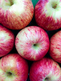 Frisches rotes Apple Stockbild