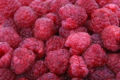 Frisches rotes Beerenobst Stockbilder