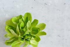 Frisches Salatgemüse von der hydrophinic Kultur Salatanlage, Wasserkulturgemüseblätter Saisongemüse Stockfotografie