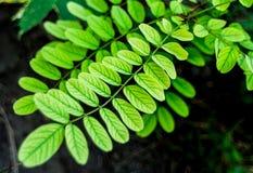 Frisches und junges grünes Blatt in den Wald-, Licht- und Magiefarben Lizenzfreie Stockfotos