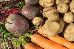 Frisches vegetables Stockbilder