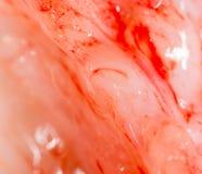 Frischfleisch mit Fett als dem Hintergrund Makro stockbild