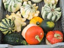 Frischgemüse auf Landwirtmarkt Lizenzfreie Stockfotos