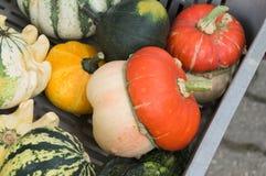Frischgemüse auf Landwirtmarkt Lizenzfreie Stockbilder