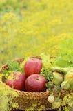 Frischgemüse und Apfel Stockfoto