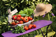 Gartengeist Stockbild