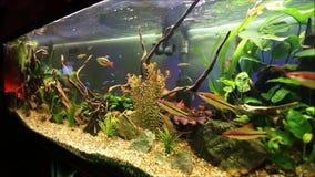Frischwasseraquarium Stockfoto