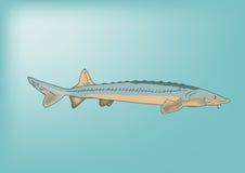 Frischwasserfische Lizenzfreies Stockfoto