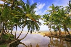Frischwasserfluß an Strand Las Terrenas, Samana-Halbinsel Stockfoto