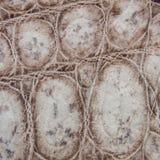 Frischwasserkrokodilbauchhaut-Beschaffenheitshintergrund stockfotos
