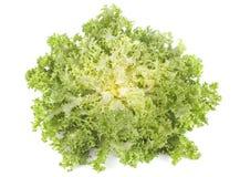 Frisee苦苣生茯莴荬菜沙拉 免版税库存照片