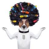 Friseur   Hund mit Lockenwicklern stockfotografie