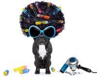 Friseurhund Stockfotografie
