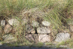 Frisian stone wall planted with European beach grass stock image