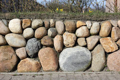Frisian stone wall planted with Wild daffodil Stock Image