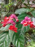 friskhet av blommor Royaltyfri Bild
