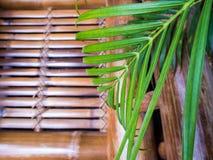 Friskhet gömma i handflatan leafvand bambustolen royaltyfri bild