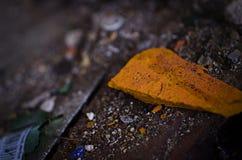 Frissons abandonnés de verre photographie stock libre de droits