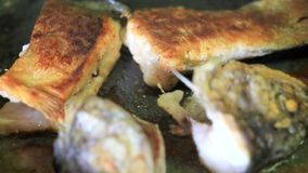 Fritando partes de peixes video estoque