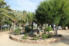 Fritids- område med palmträd arkivfoto