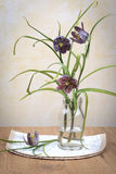 Fritillaria Meleagris - Lazarus Royalty Free Stock Photo