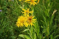 Fritillary Butterfly Stock Photos