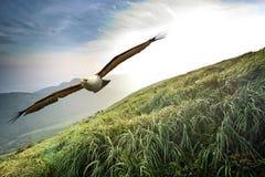 Fritt flyg till och med våra vingar Arkivbilder