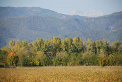 Friuli Field in Autumn Royalty Free Stock Images
