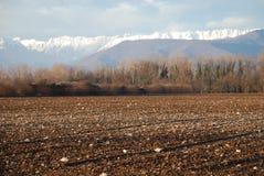 Friuli-Winter-Feld Lizenzfreie Stockbilder