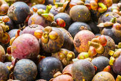 Friut de Mangoteen Tailândia Fotografia de Stock