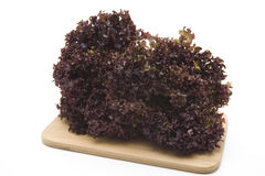 Frizzy salad on edge board Royalty Free Stock Photos