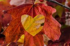Förälskelsenedgången med en hjärta klippte in i bladet Royaltyfri Bild