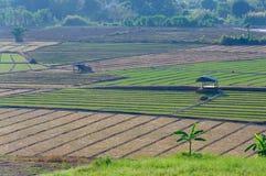 农田,泰国 库存图片