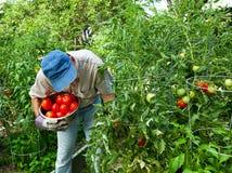 främre trädgårds- stads- grönsakgård Royaltyfri Fotografi
