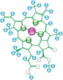 Fórmula I de la clorofila Foto de archivo libre de regalías