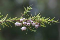 Frod vert d'arbre Images stock