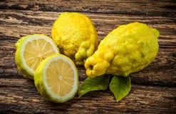 Frodig citrus jambhiri för grov citron Royaltyfri Foto