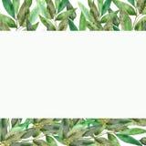 Frodig eukalyptusram på en vit bakgrund Vattenfärgfilialer och nya eukalyptussidor Handen målade medicinalväxter för stock illustrationer