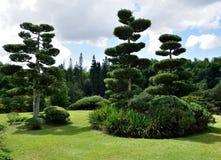 Frodig gräsplan Arkivbild