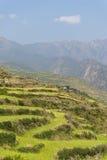 Frodig gräsplan terrasserade bergfält Royaltyfria Foton