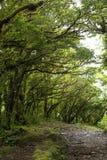 Frodig grön lövverk omger de talrika fotvandra slingorna i det Monteverde molnet Forest Reserve i Costa Rica arkivfoto