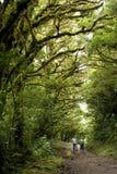 Frodig grön lövverk omger de talrika fotvandra slingorna i det Monteverde molnet Forest Reserve i Costa Rica royaltyfria bilder