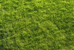 frodig grön lawn arkivfoton