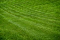 frodig grön lawn royaltyfri foto